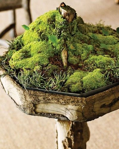 Indoor Moss Garden, Martha Stewart / For My Backyard