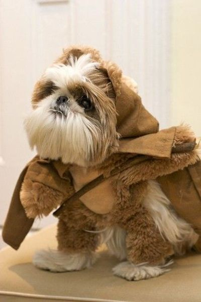 ... Shih Tzu Ewok Funny Shih Tzu Dog Dressed Like An Ewok From Star Wars