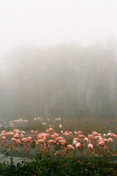 Flamingos. Through the lens of Zara Pfeifer.