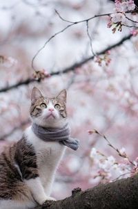 cat & blossoms