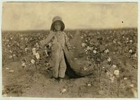 5-year old Harold Walker picking cotton, Comanche Co. OK, by Lewis W. Hine 1916