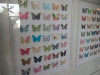 "Butterfly Paper ""Specimen"" Decor Idea from Remodelaholic"