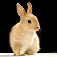 Rabbits are such sweet, timid little creatures. How can you not help but to love them?