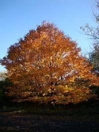 Lonely Autumn Tree (Elm Creek Park Reserve, MN) by: Tina Hartman