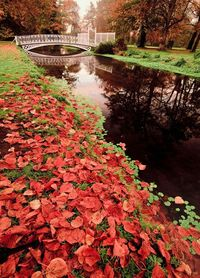The Color of Autumn. Morden Hall Park in London, England