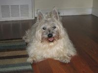 Our dog Duffy who turned 17 1/2 years young yesterday!