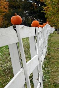 pumpkins on the fence