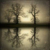 Reflections in fog