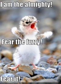 The fuzzy!