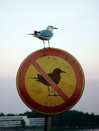 no birds allowed