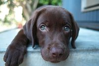 such an adorable pup!