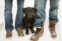 duck boots and labrador