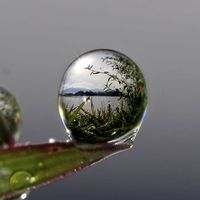 Photograph thousands dew into the dew by teguh santosa