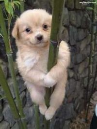 Help! I've climbed up and I can't get down.