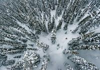Tree Skiing Rogers Pass, British Columbia, Canada by Jordan Manley, nationalgeographic: Away from the groomed trails and back to nature. #Tree Skiing #Skiing #Photography #Rogers Pass #British Columbia #Canada #Jordan Manley