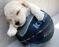 puppy with basketball