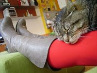 cat & red socks