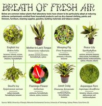 Plants Which are Good at Reducing Airborne Contaminants
