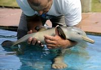 baby dolphin. Too cute! <3
